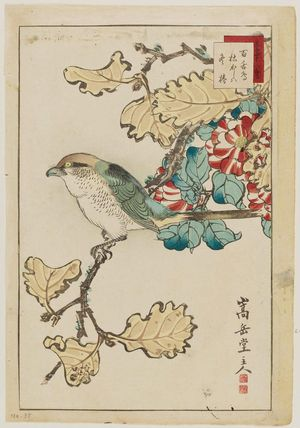 Nakayama Sûgakudô: No. 38, from the series Forty-eight Hawks Drawn from Life (Shô utsushi yonjû-hachi taka) - ボストン美術館