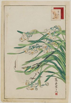 Nakayama Sûgakudô: No. 37, Wagtail and Narcissus (Sekirei suisen), from the series Forty-eight Hawks Drawn from Life (Shô utsushi yonjû-hachi taka) - ボストン美術館