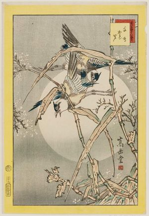 Nakayama Sûgakudô: No. 39, Plovers and Dry Reeds (Chidori kareashi), from the series Forty-eight Hawks Drawn from Life (Shô utsushi yonjû-hachi taka) - ボストン美術館