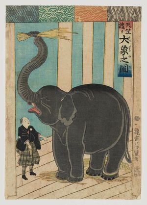 歌川芳豊: The Great Elephant from India (Tenjiku watari dai zô no zu) - ボストン美術館