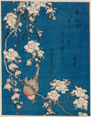 葛飾北斎: Bullfinch and Weeping Cherry (Uso, shidarezakura), from an untitled series known as Small Flowers - ボストン美術館