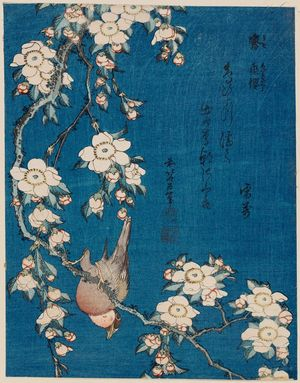 Katsushika Hokusai: Bullfinch and Weeping Cherry (Uso, shidarezakura), from an untitled series known as Small Flowers - Museum of Fine Arts