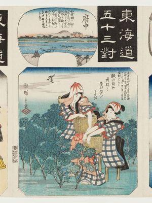 歌川広重: Fuchû: Women Picking Tea Leaves, from the series Fifty-three Pairings for the Tôkaidô Road (Tôkaidô gojûsan tsui) - ボストン美術館