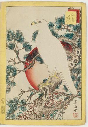 Nakayama Sûgakudô: No. 1, White Falcon and Five-needled Pine (Shirotaka goyô no matsu), from the series Forty-eight Hawks Drawn from Life (Shô utsushi yonjû-hachi taka) - Museum of Fine Arts