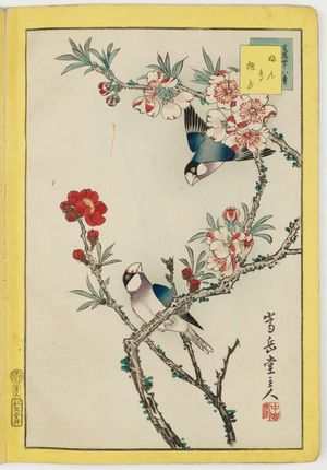 Nakayama Sûgakudô: No. 5, Finches and Peach Blossoms (Bundori momo no hana), from the series Forty-eight Hawks Drawn from Life (Shô utsushi yonjû-hachi taka) - ボストン美術館