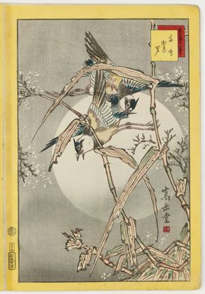 Nakayama Sûgakudô: No. 39, Plovers and Dry Reeds (Chidori kareashi), from the series Forty-eight Hawks Drawn from Life (Shô utsushi yonjû-hachi taka) - Museum of Fine Arts