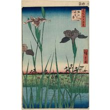 歌川広重: Horikiri Iris Garden (Horikiri no hanashôbu), from the series One Hundred Famous Views of Edo (Meisho Edo hyakkei) - ボストン美術館