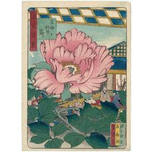 Nansuitei Yoshiyuki: Peonies in Full Bloom in the Garden of Kichisuke (Kichisuke botan sakari) , from the series One Hundred Views of Osaka (Naniwa hyakkei) - ボストン美術館