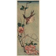 歌川広重: Sparrow and Camellia - ボストン美術館