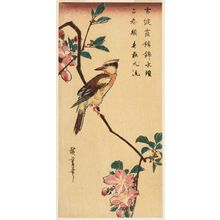 Utagawa Hiroshige: Oriole on a Branch of Mountain Cherry - Museum of Fine Arts