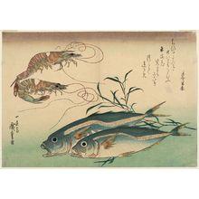 歌川広重: Horse Mackerel, Freshwater Prawns, and Seaweed, from an untitled series known as Large Fish - ボストン美術館