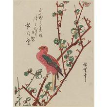 Utagawa Hiroshige: Macaw on Plum Branch - Museum of Fine Arts
