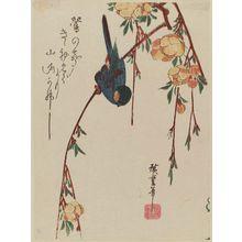 Utagawa Hiroshige: Bulfinch on Yamabuki Branch - Museum of Fine Arts