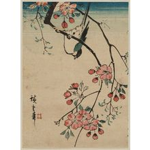 Utagawa Hiroshige: Bird on Cherry Branch - Museum of Fine Arts