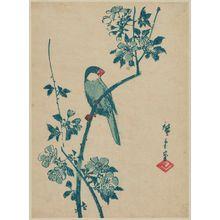 Utagawa Hiroshige: Finch on Cherry Branch - Museum of Fine Arts