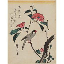 Utagawa Hiroshige: Finch on Camellia - Museum of Fine Arts