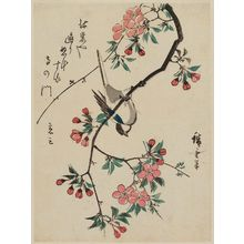 Utagawa Hiroshige: Bird Upside-down on Aronia Branch - Museum of Fine Arts