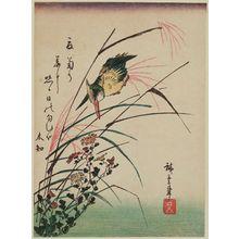 Utagawa Hiroshige: Kingfisher and Wild Chrysanthemums - Museum of Fine Arts