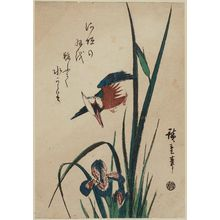 Utagawa Hiroshige: Kingfisher and Iris - Museum of Fine Arts