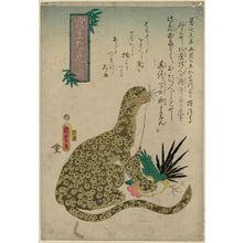 歌川国麿: Fierce Tiger [sic] Drawn from Life (Shasei môko no zu) - ボストン美術館