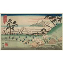 Utagawa Hiroshige: Cherry-blossom Viewing at Asuka Hill (Asukayama hanami), from the series Famous Places in Edo (Kôto meisho) - Museum of Fine Arts