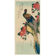 代長谷川貞信: Pheasant and Chrysanthemums - ボストン美術館