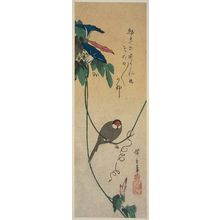 Utagawa Hiroshige: Morning Glories and Finch - Museum of Fine Arts