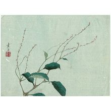 Harada Keigaku: Plant - Museum of Fine Arts