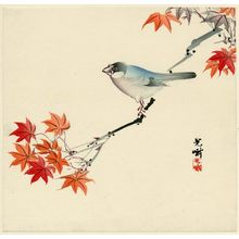 Iijima Koga: Finch on Maple Branch - Museum of Fine Arts
