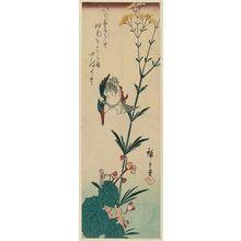Utagawa Hiroshige: Kingfisher and Begonia - Museum of Fine Arts