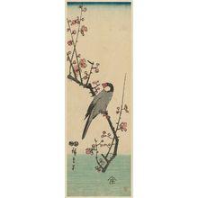 Utagawa Hiroshige: Finch on Red Plum Branch - Museum of Fine Arts