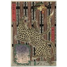 歌川芳豊: On Display in West Ryôgoku (Nishi Ryôgoku ni oite...): Leopard - ボストン美術館