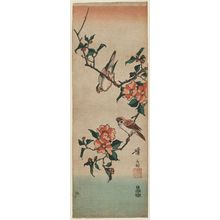 Keisai Eisen: Finches on Camellia Branch - Museum of Fine Arts