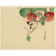 Hasegawa Sadanobu III: Bird on branch of fruit tree - Museum of Fine Arts