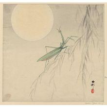 小原古邨: Praying mantis and moon - ボストン美術館