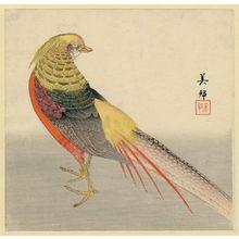 豊川芳国: Golden Pheasant - ボストン美術館