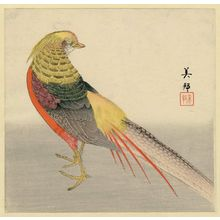 Toyokawa Yoshikuni: Golden Pheasant - Museum of Fine Arts