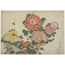 葛飾北斎: Chrysanthemums and Horsefly, from an untitled series known as Large Flowers - ボストン美術館