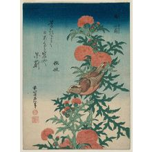 葛飾北斎: Shrike and Blessed Thistle (Mozu, oniazami), from an untitled series known as Small Flowers - ボストン美術館