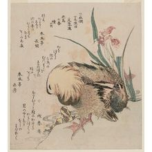 Kubo Shunman: Mandarin Ducks and Iris, from the series Series of Seven Bird-and-Flower Prints for the Fuyô Circle of Kanuma in Shimotsuke Province (Yamagawa Shimotsuke Kanuma Fuyô-ren kachô nanaban tsuzuki no uchi) - Museum of Fine Arts