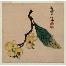 Katsushika Taito II: Branch of Loquat - ボストン美術館