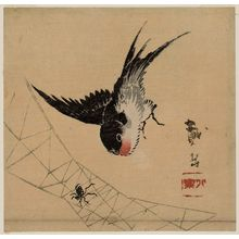 Taigaku: Swallow and Spider - Museum of Fine Arts
