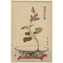 Utagawa Toyohiro: Mizu-aoi in Bowl with Carp Design, from the series Flower Arrangements by Various Modern Schools (Tôsei shoryû ikebana zu) - Museum of Fine Arts
