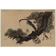 Utagawa Toyohiro: Falcon, Sparrow, and Pine Tree - Museum of Fine Arts