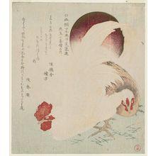 窪俊満: Cock, Hen and Rising Sun, from the series Series of Seven Bird-and-Flower Prints for the Fuyô Circle of Kanuma in Shimotsuke Province (Yamagawa Shimotsuke Kanuma Fuyô-ren kachô nana bantsuzuki no uchi) - ボストン美術館
