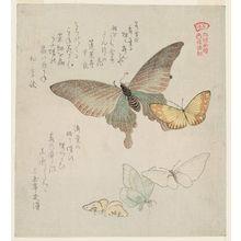窪俊満: Moths and Butterflies, from the series A Picturebook of Butterflies (Gunchô gafu) - ボストン美術館