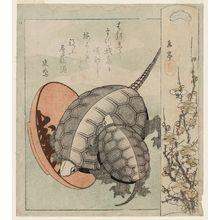 屋島岳亭: Turtles and a Sake Cup with Plum Blossoms - ボストン美術館