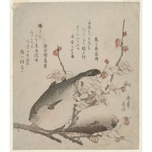 Yashima Gakutei: Plum Blossoms and Blowfish (Fugu) - Museum of Fine Arts