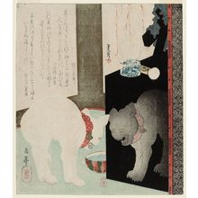 Yashima Gakutei: White Cat Hissing at Its Reflection in a Black Lacquer Mirror Stand - Museum of Fine Arts