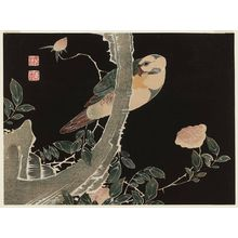 Jakuchu: Rose and Parrot. - Museum of Fine Arts
